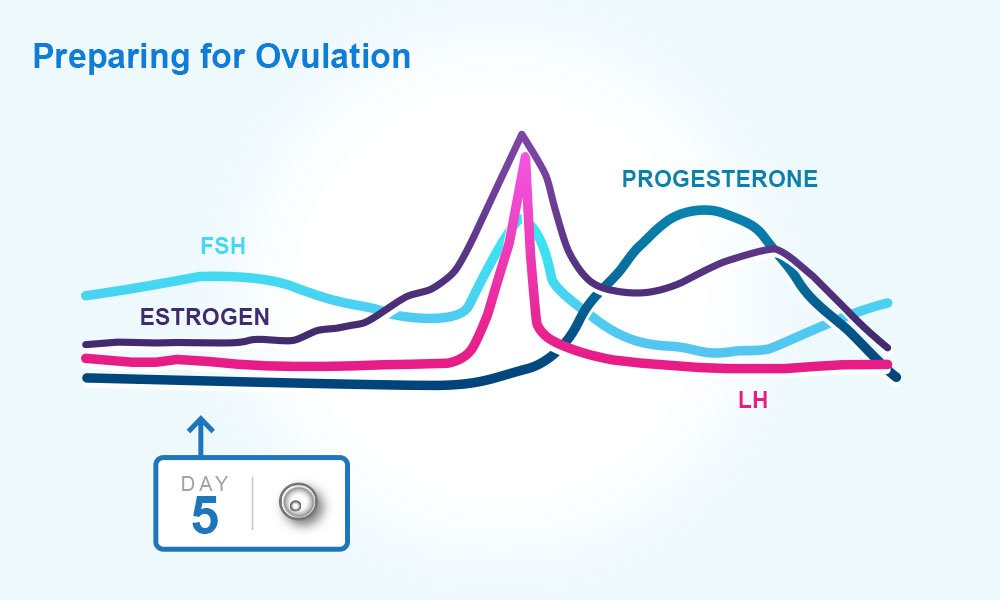 Understanding Menstrual Cycles, Your Periods and Ovulation - Clearblue